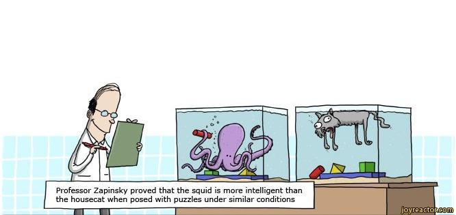 Cartoon courtesy kindofnormal.com